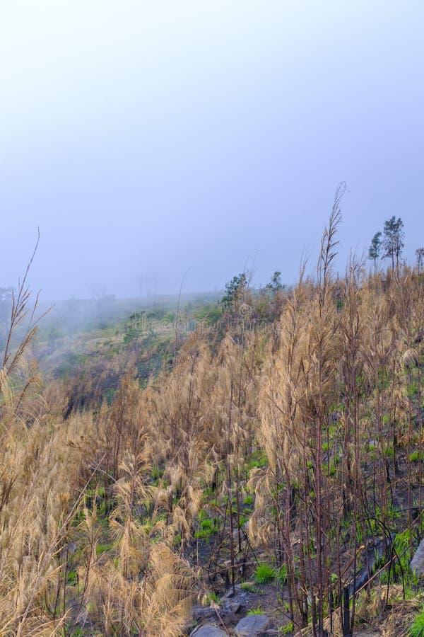 Bergskedja som täckas i moln arkivfoto
