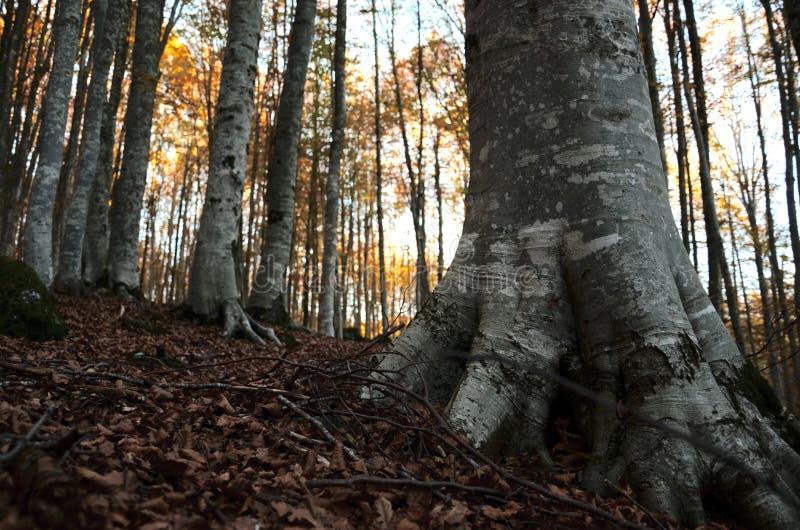 Bergskog i höst arkivbild