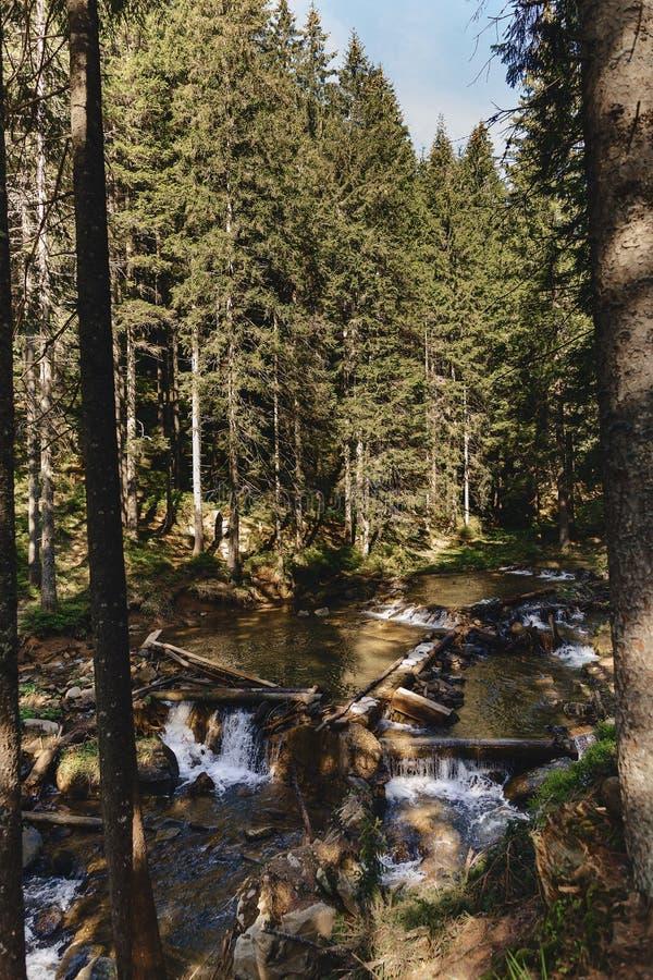 bergskog på carpathians royaltyfri bild