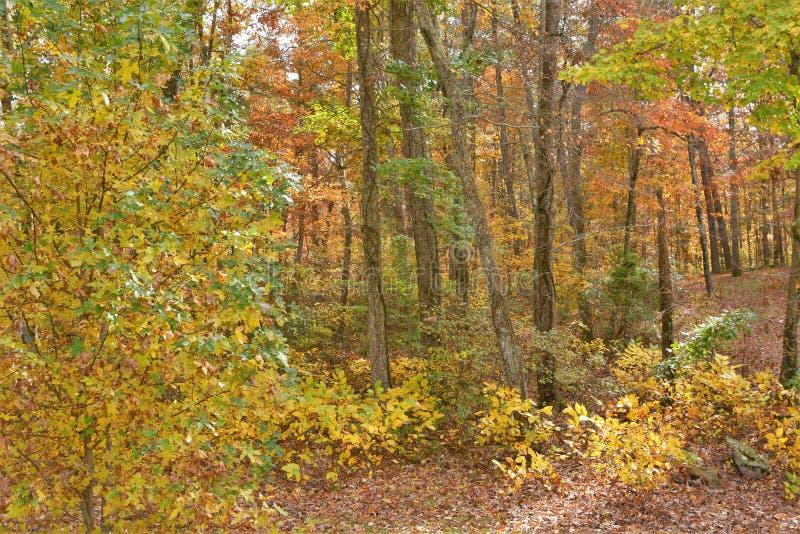 Bergskogen blir fördjupad i nedgångfärger som säsongtagandehållen royaltyfria foton