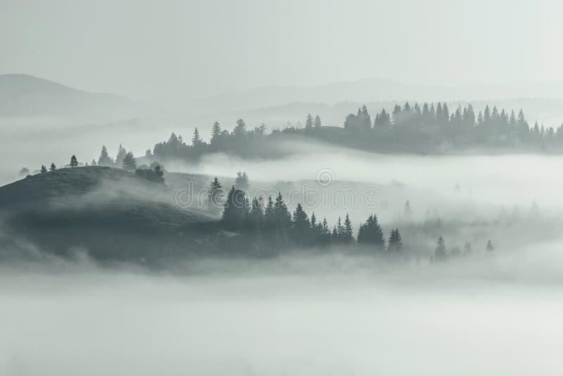 Bergsommarsikten, mystisk mist täckte dalen och kullen i träd, den hisnande dimmiga platsen, spektakulär gryningnaturbild, arkivbilder