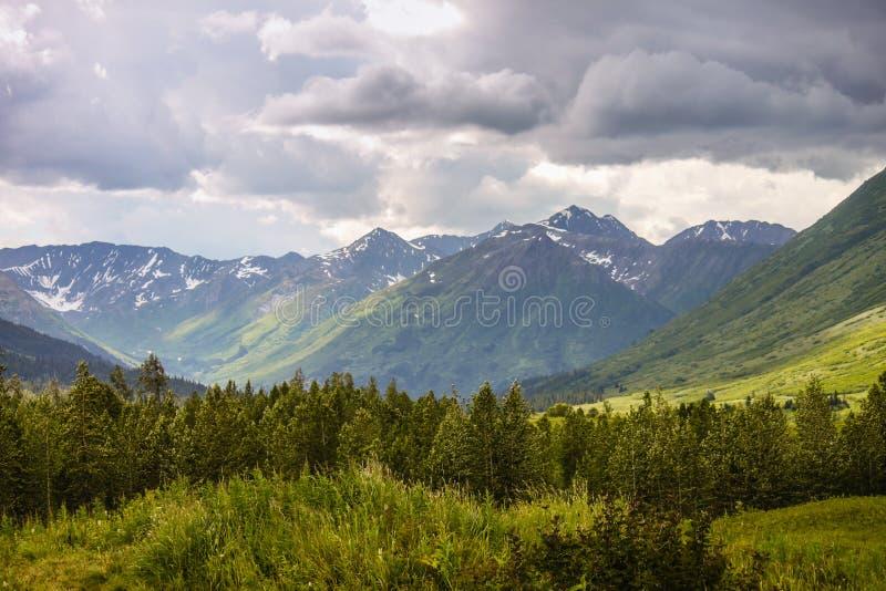 Bergspitzen Chugach-Staatsangehöriger Forest Alaska stockbilder