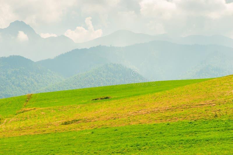 Bergssida med grönt gräs royaltyfri foto