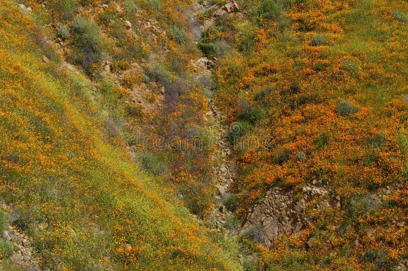 Bergssida som fullständigt täckas i vildblommor arkivbild