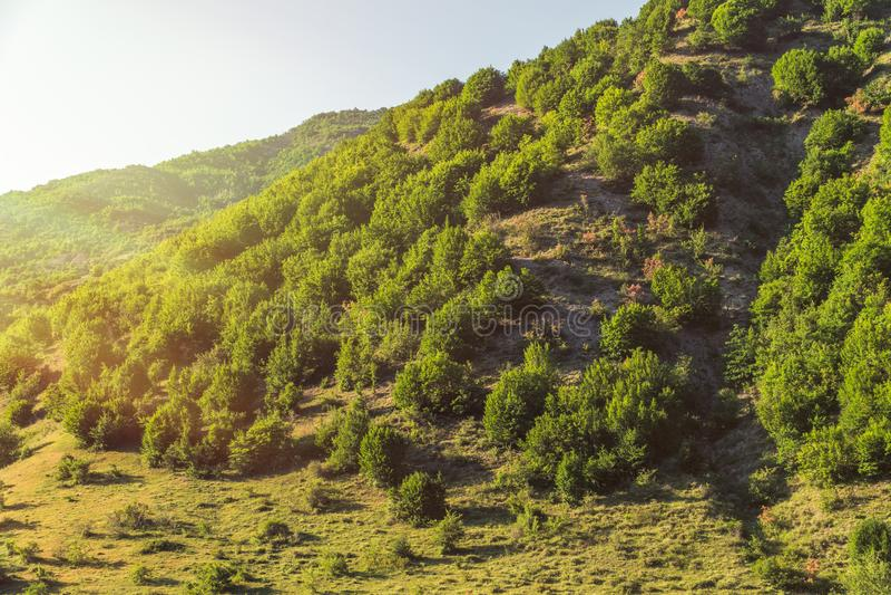 Bergssida som täckas med den gröna skogen royaltyfri fotografi