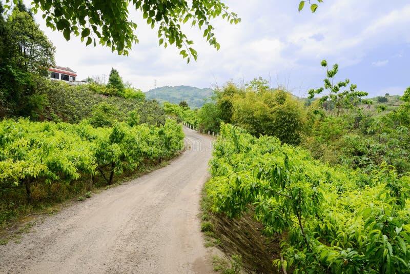 Bergssidalandsväg i fruktträd på molnig vårdag fotografering för bildbyråer