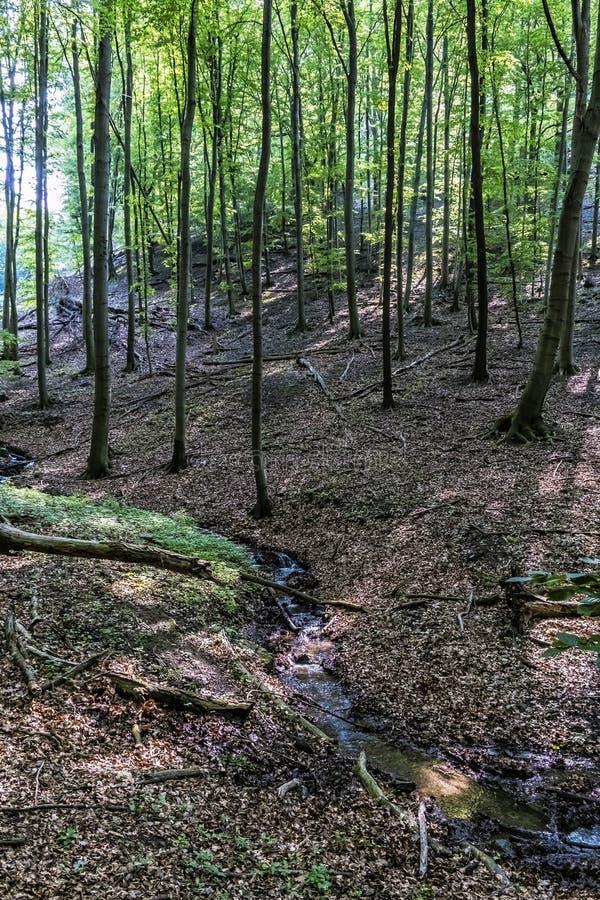 Bergström i lövskogen, lilla Carpathians, Slovakien arkivfoton