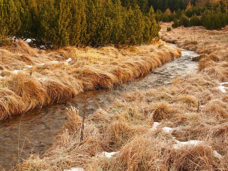 Bergström på början av vintertid, gammalt orange torrt gräs. royaltyfria foton