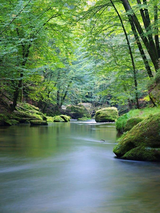 Bergströmmen i ny gräsplan lämnar skogen efter regnig dag. Första höstfärger i aftonsolstrålar. Slutet av sommar på floden arkivfoton