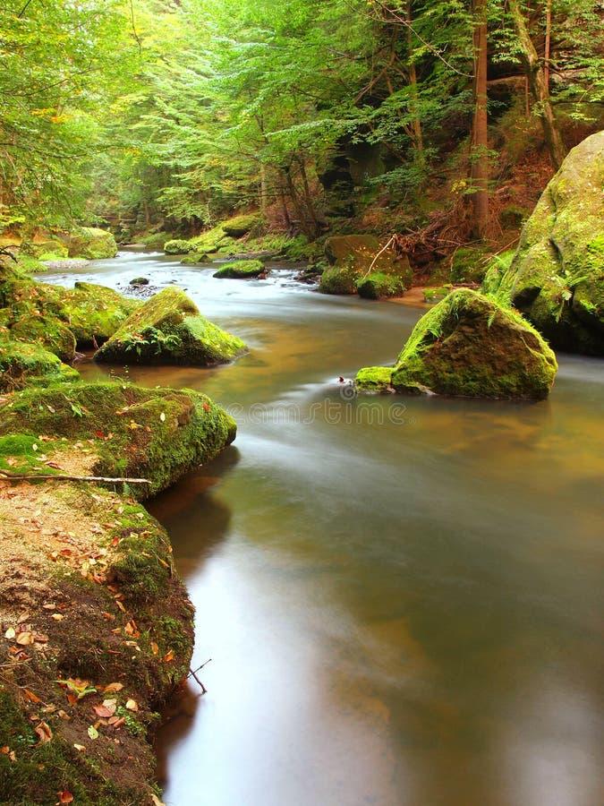 Bergströmmen i ny gräsplan lämnar skogen efter regnig dag. Första höstfärger i aftonsolstrålar. Slutet av sommar på floden fotografering för bildbyråer
