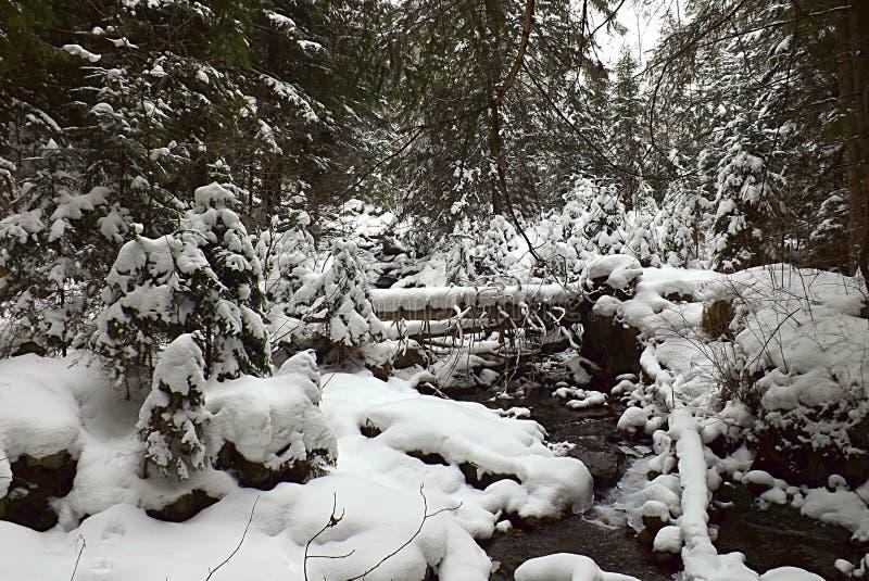Bergstroom in de winter in de bergen stock foto