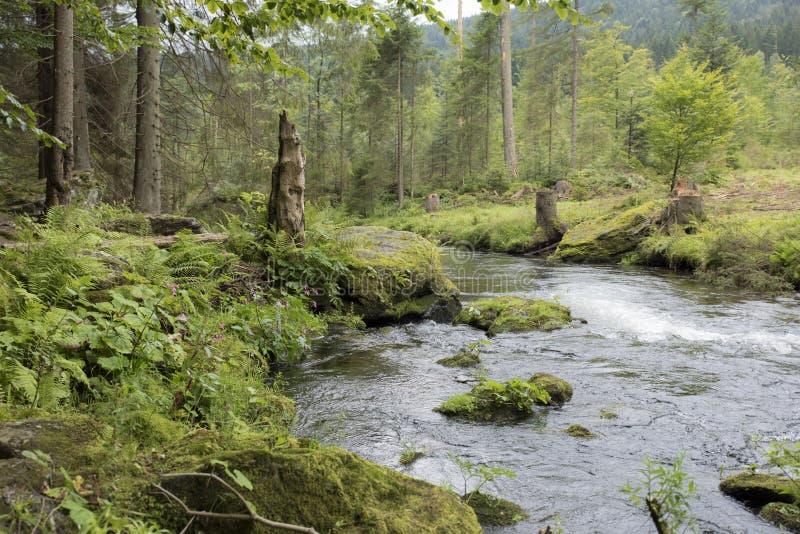 Bergstroom die door het bos vloeien stock afbeeldingen