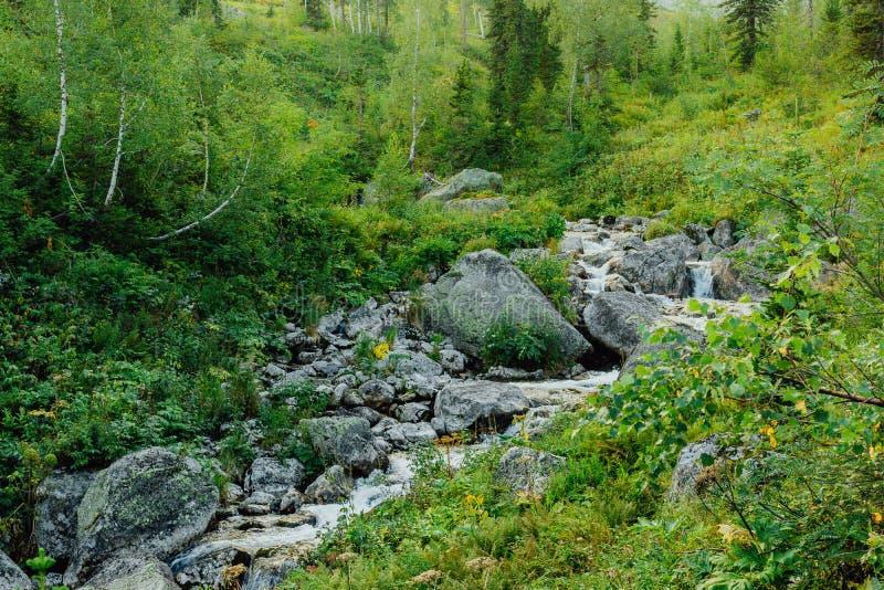Bergstroom in het bos royalty-vrije stock afbeeldingen