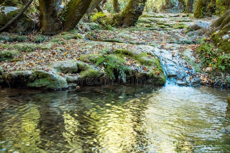 Bergstroom in het bos stock foto's