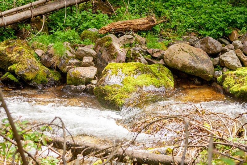 Bergstroom met stenen met mos en groen gras worden behandeld dat royalty-vrije stock afbeelding
