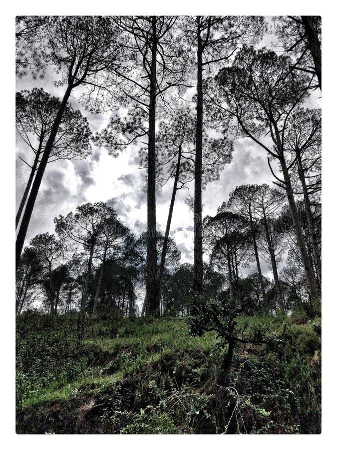 Bergträd och en molnig dag arkivbild