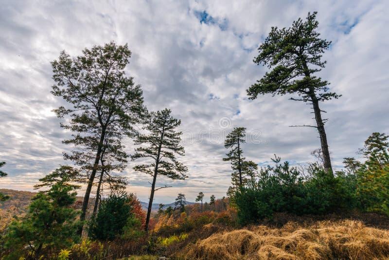 Bergträden av den Michaux tillståndsskogen i Pennsylvania i fa arkivbild