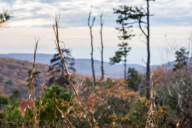 Bergträden av den Michaux tillståndsskogen i Pennsylvania i fa royaltyfri bild