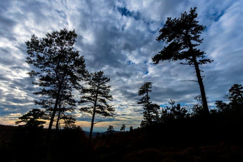 Bergträden av den Michaux tillståndsskogen i Pennsylvania i fa royaltyfria foton