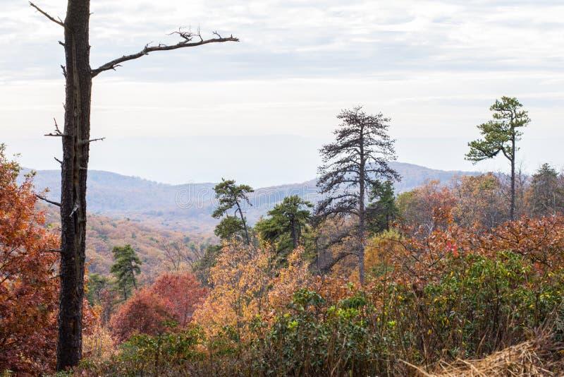 Bergträden av den Michaux tillståndsskogen i Pennsylvania i fa fotografering för bildbyråer