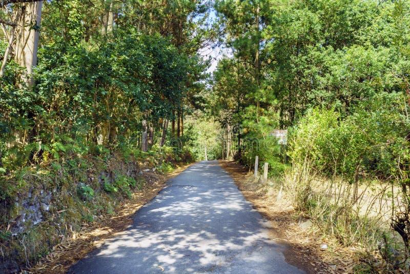 Bergväg som omges av mycket grön vegetation av typisk tre royaltyfri bild
