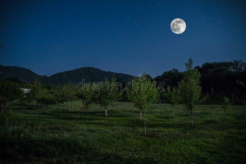 Bergväg till och med skogen på en fullmånenatt Sceniskt nattlandskap av mörker - blå himmel med månen _ royaltyfria bilder