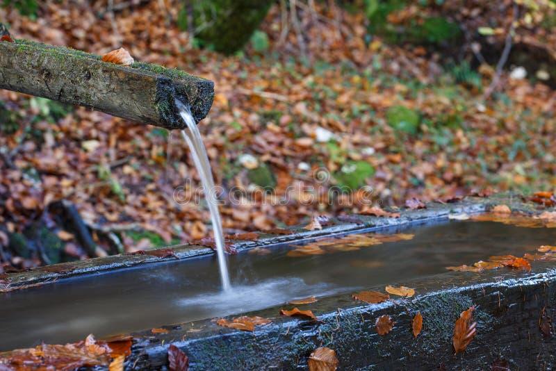 Bergvår av rent som är klar, sötvatten med vattenho i skogen royaltyfri foto