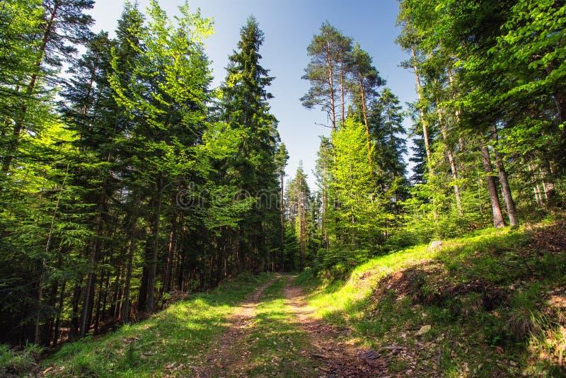 Bergvårlandskap, slinga och grönt gräs i skogen royaltyfria bilder