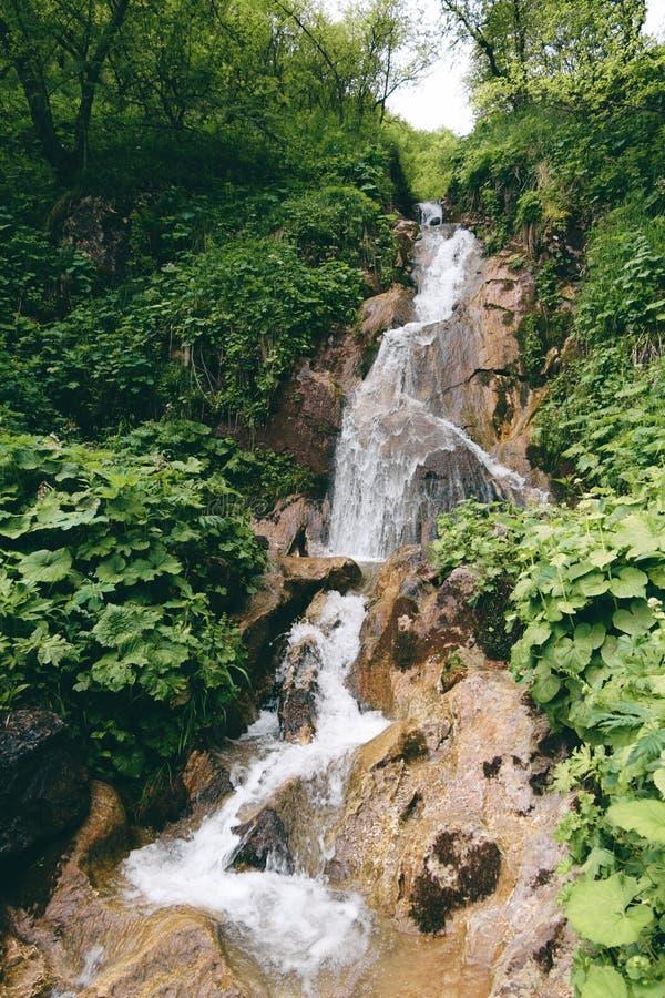 Bergvattenfall i grön tropisk skog och sidor av växter arkivfoton