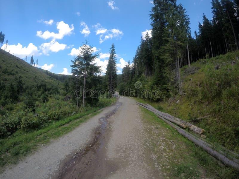 Bergwanderung in Apuseni-Bergen stockbild