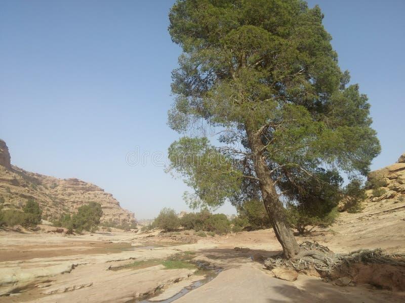 Berich d'ouad d'arbre image libre de droits
