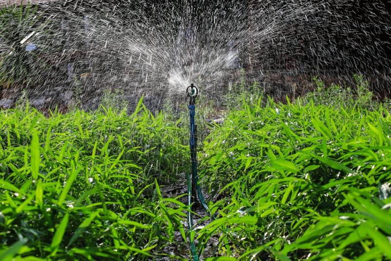 Berieselungsanlage, welche die Anlagen, tropisches Thailand wässert stockfotos