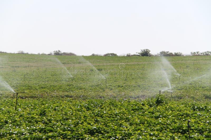 Berieselungsanlagen plätschert Wasser über einem Feld stockbilder