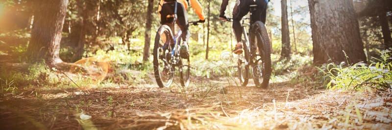 Berijdende de bergfiets van het fietserpaar in het bos stock foto's
