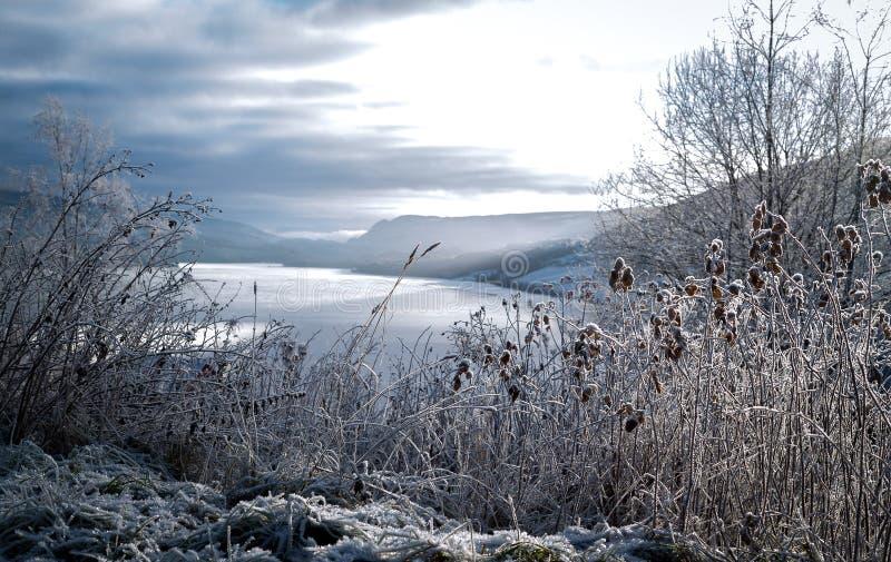 Berijpt de winterlandschap in koude temperatuur met ijs en hoar vorst op meer, rijp op kernachtige, bevroren bladeren en bergen royalty-vrije stock afbeeldingen