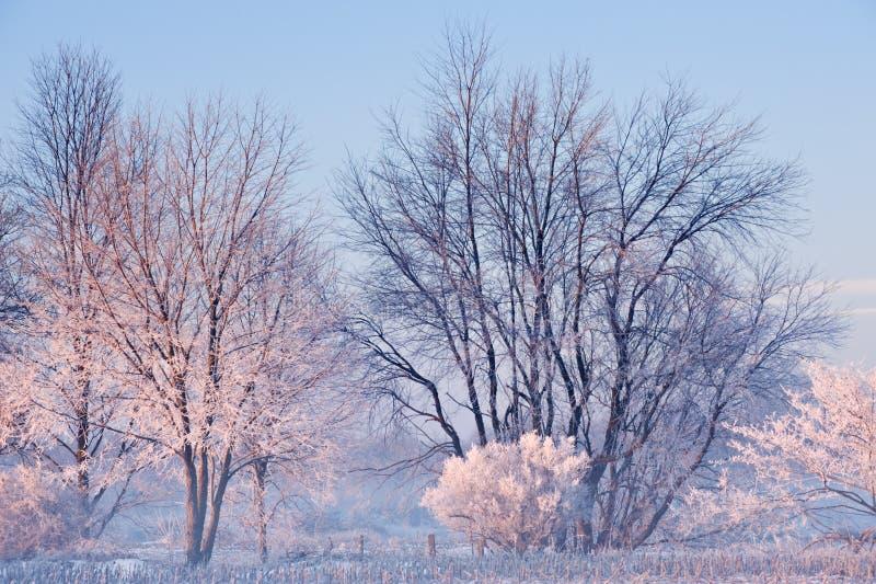 Berijpte Bomen stock fotografie