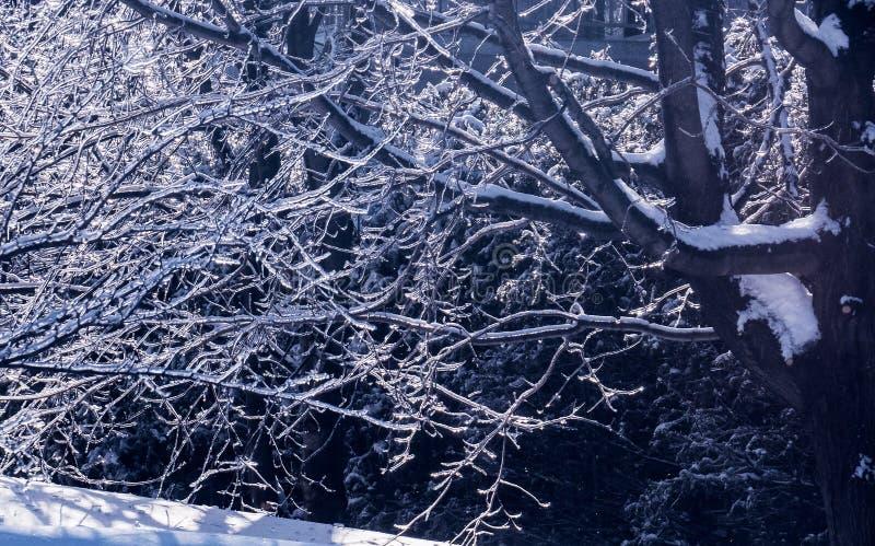 Berijpte bomen die op het heldere zonlicht wijzen royalty-vrije stock foto's