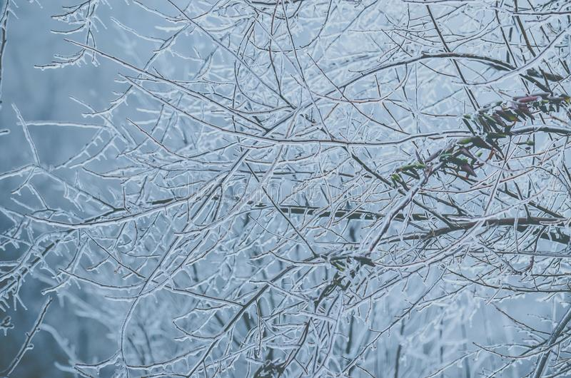 Berijpte boomtakken in de winter stock afbeelding