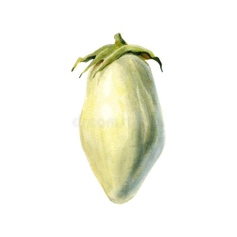Beringela branca ilustração isolada da aquarela ilustração royalty free