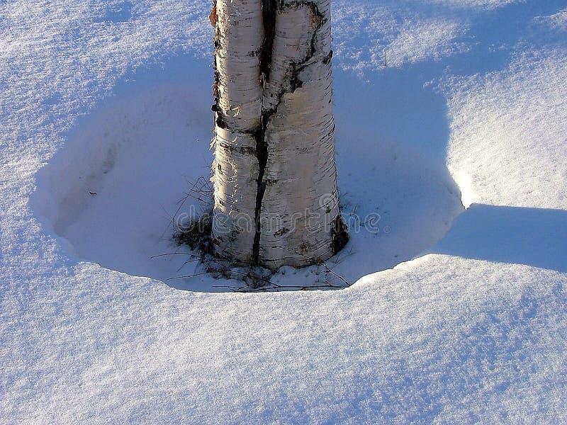 Download Berk stock foto. Afbeelding bestaande uit winter, berk, hout - 48400