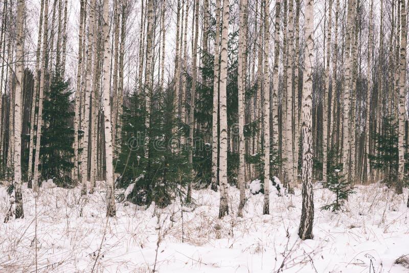 berkbomen in de wintersneeuw - uitstekend retro effect stock foto