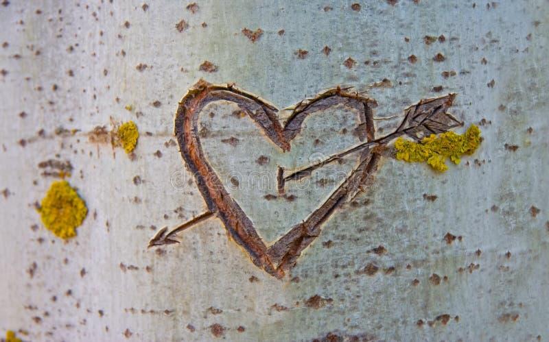 Berkboom met gesneden hart stock foto's
