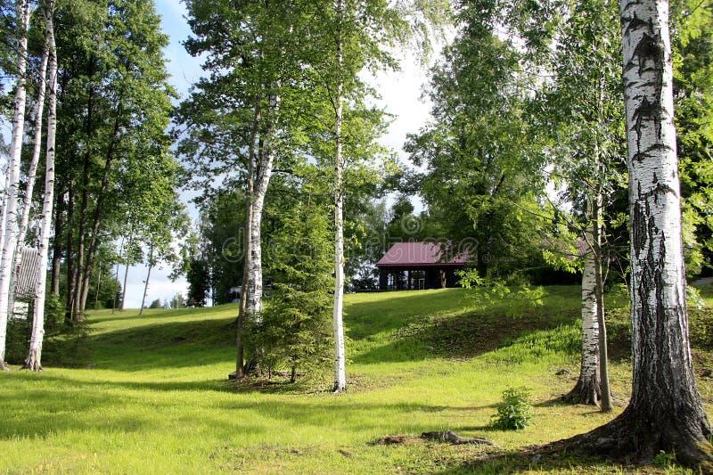 Berkbos en weide in het Letse platteland stock afbeelding