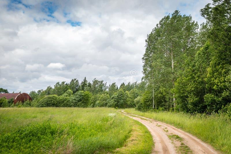 Berkbosje in de wind, Letland royalty-vrije stock afbeelding