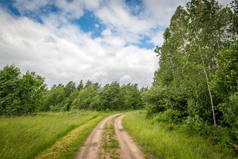 Berkbosje in de wind, Letland royalty-vrije stock foto