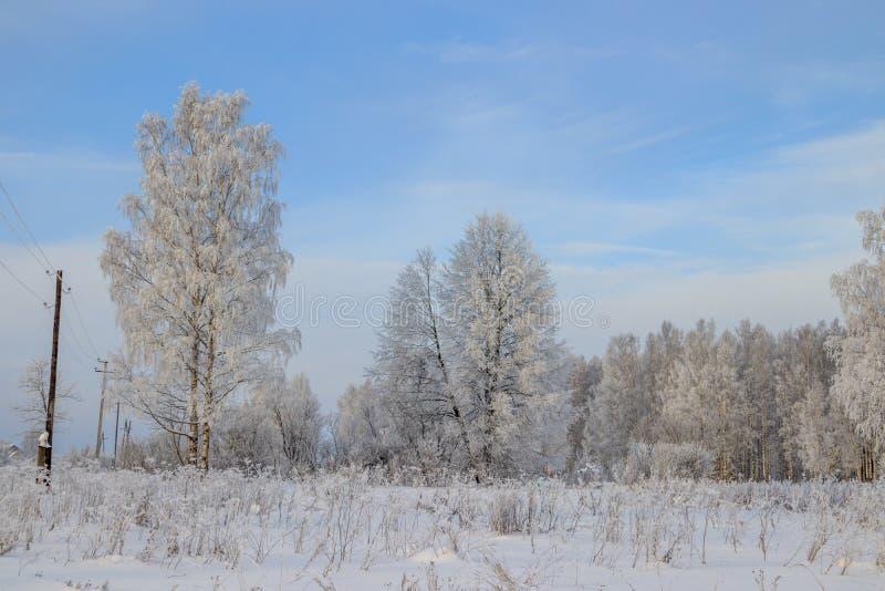 Berkbosje in de winter in de sneeuw Witte bomen Bomen in de sneeuw Sneeuwbeeld Het bosje van het de winterlandschap van witte bom stock foto