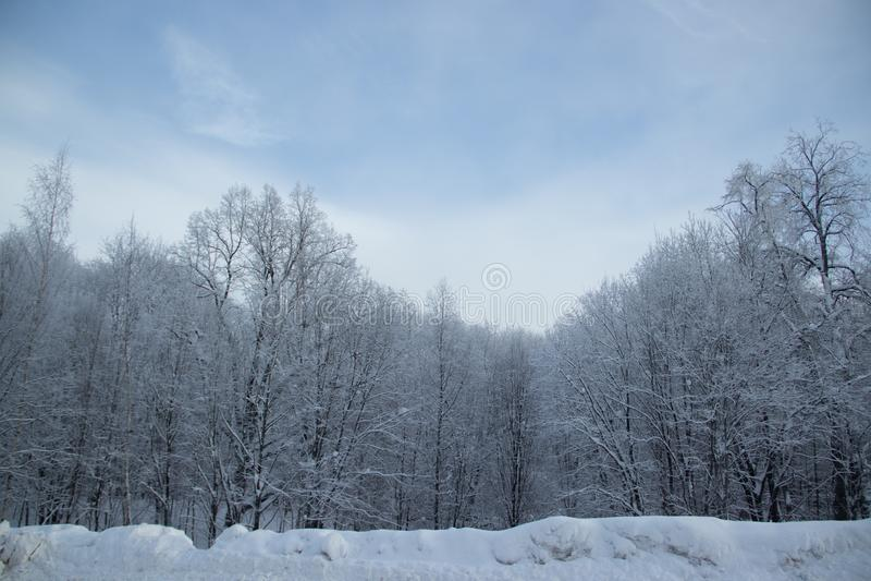 Berkbosje in de winter in de sneeuw Witte bomen Bomen in de sneeuw Sneeuwbeeld Het bosje van het de winterlandschap van witte bom royalty-vrije stock afbeeldingen
