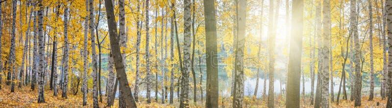 Berkbosje tegen het meer op zonnige de herfstdag, landschap royalty-vrije stock foto's