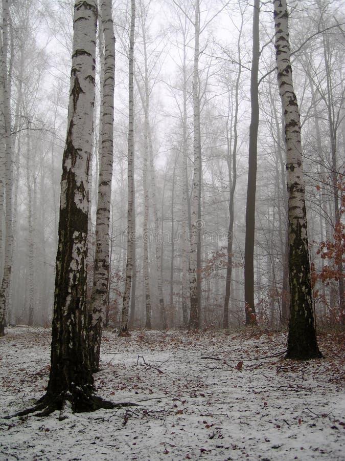 Berkehout onder sneeuw royalty-vrije stock afbeelding