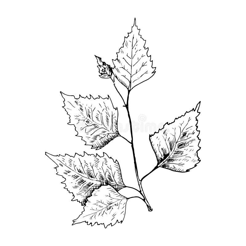 Berkschets De hand getrokken zwarte tak van de berkboom, berkblad De illustratie van de schetsstijl, op witte achtergrond wordt g vector illustratie